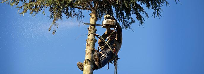 Arborist Banner Image