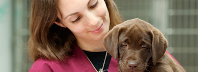 Veterinary Assistant Banner Image